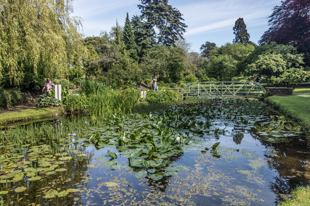 Botantic Gardens Dublin, taken by Willian Murphy