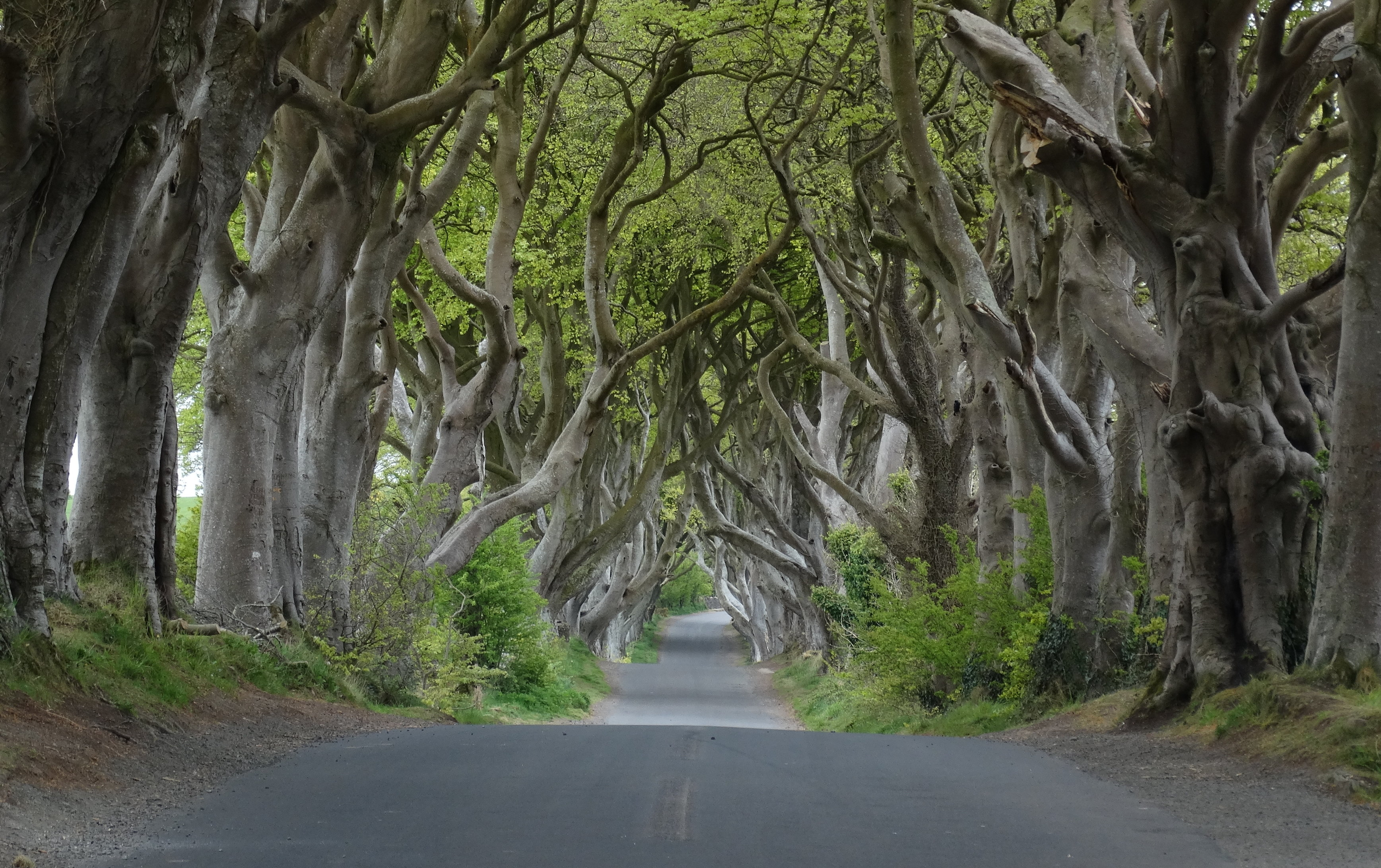 Game of Thrones, the dark hedges