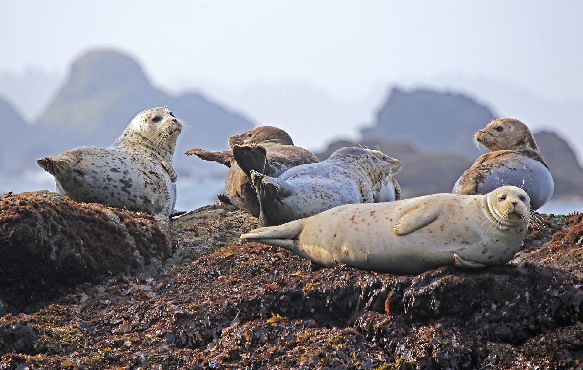Seals on Rock